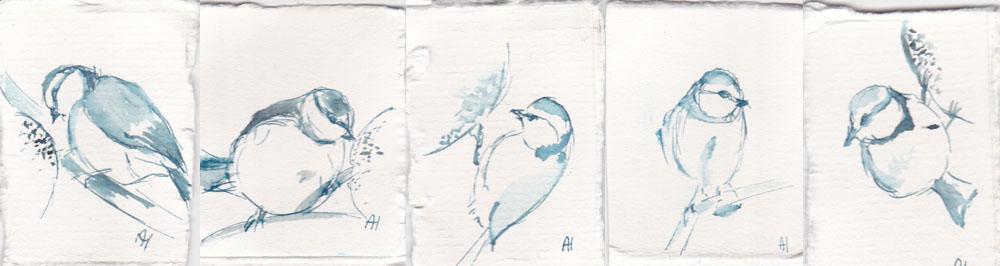 Pimpelmees miniatuurtjes in inkt van Ann Hoogendoorn