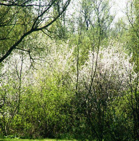 lichter lente